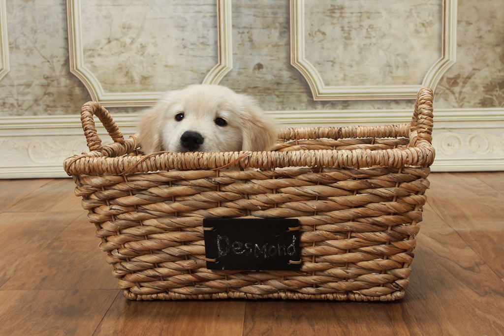 desi in basket_20150316